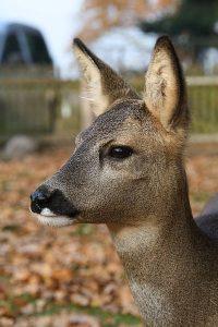 Pauline - Tiere in Bokelsberge