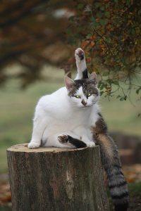 Susi, die Katze