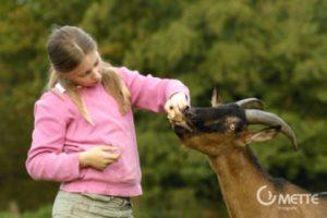 Kinder - Tiere - Kommunikation / Die Idee