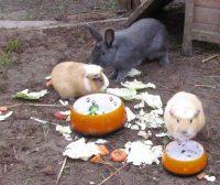 Marshmallow und Krümel