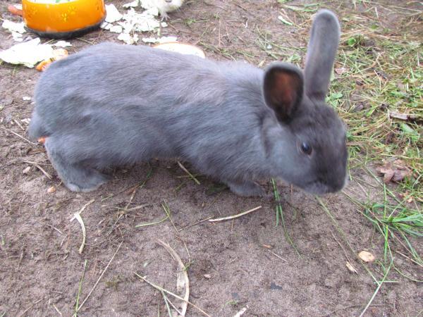 Sina, das Kaninchen